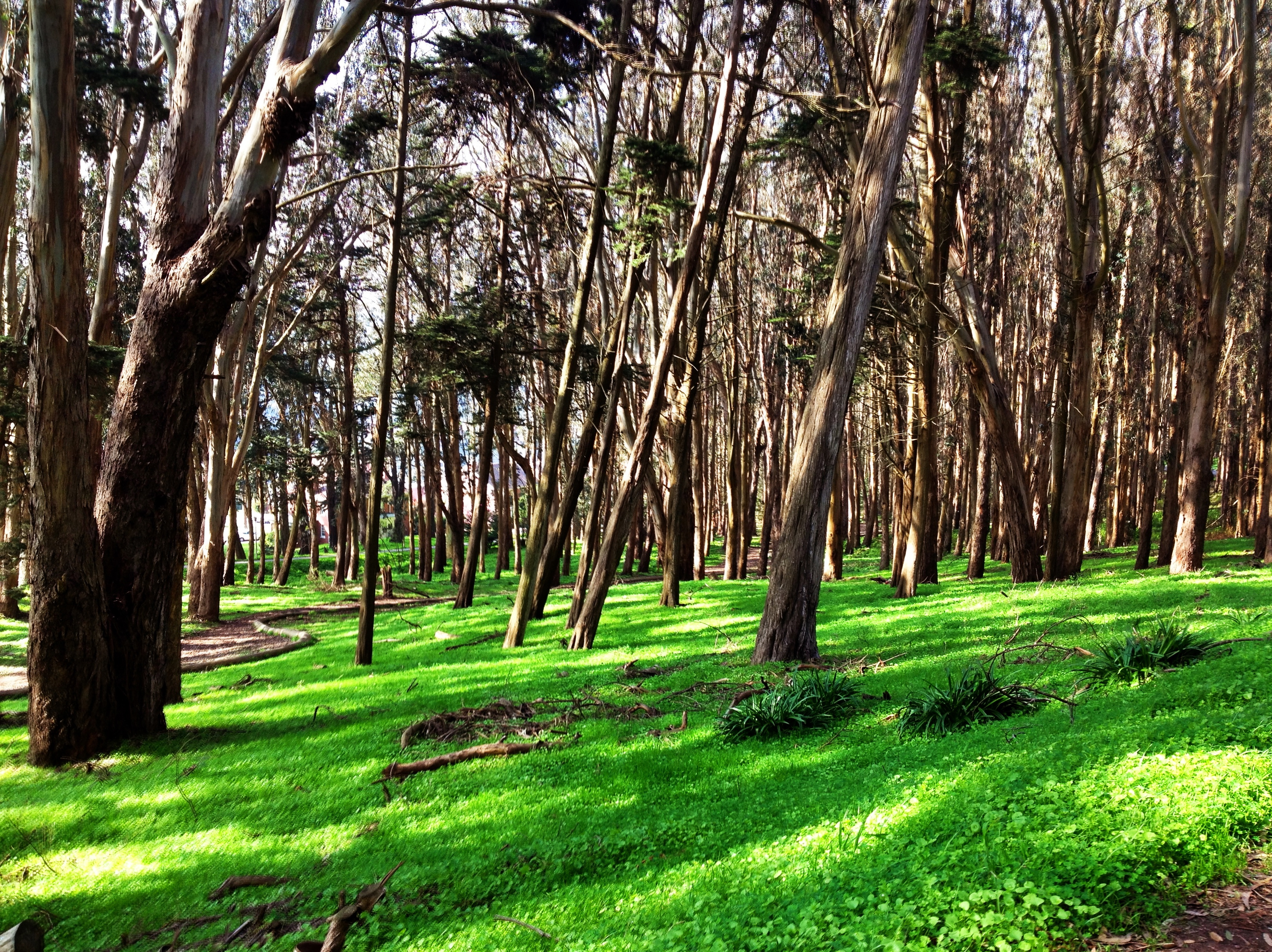 Trees In The Presidio